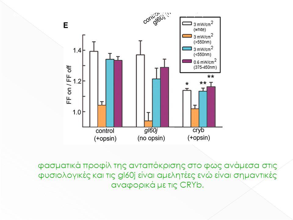 φασματικά προφίλ της ανταπόκρισης στο φως ανάμεσα στις φυσιολογικές και τις gl60j είναι αμελητέες ενώ είναι σημαντικές αναφορικά με τις CRYb. φασματικ