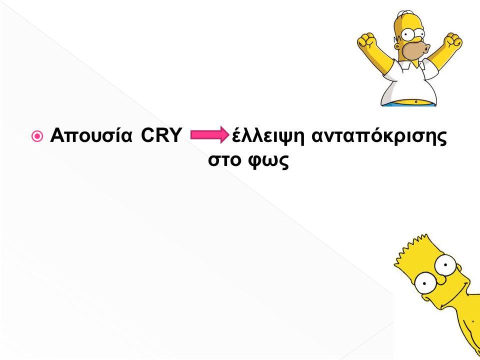  Απουσία CRY έλλειψη ανταπόκρισης στο φως
