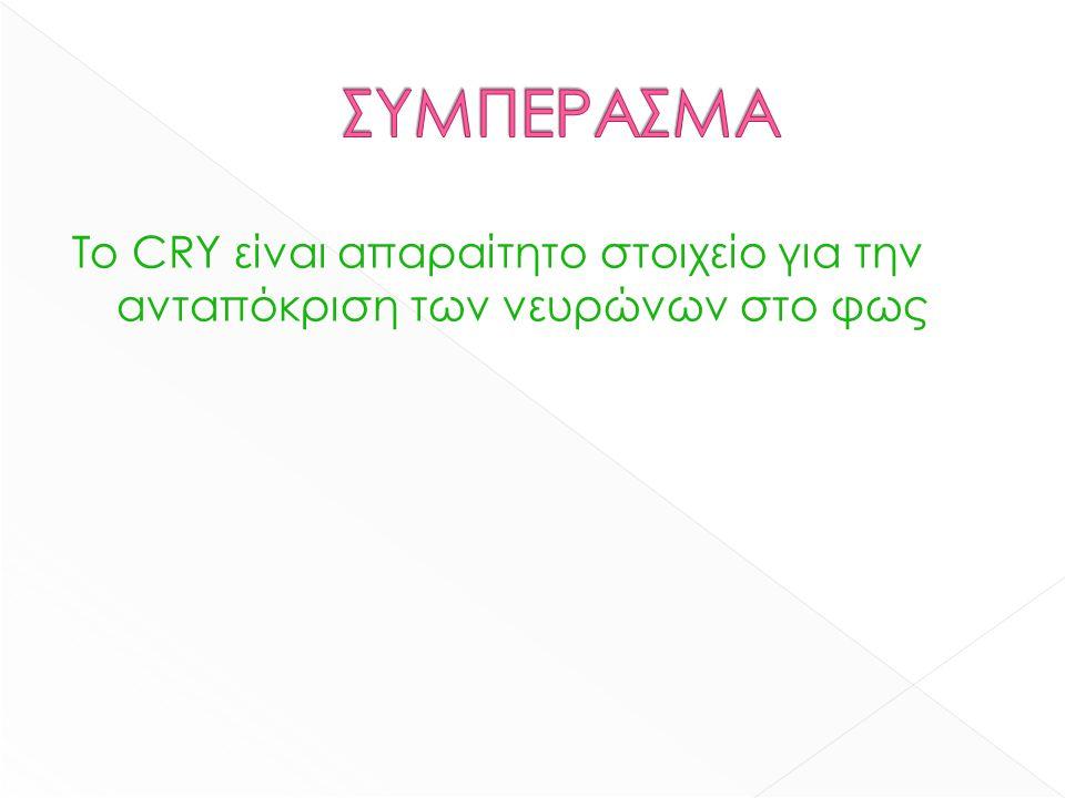 Το CRY είναι απαραίτητο στοιχείο για την ανταπόκριση των νευρώνων στο φως