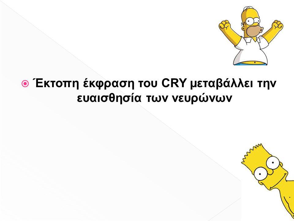  Έκτοπη έκφραση του CRY μεταβάλλει την ευαισθησία των νευρώνων