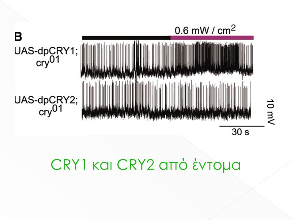 CRY1 και CRY2 από έντομα
