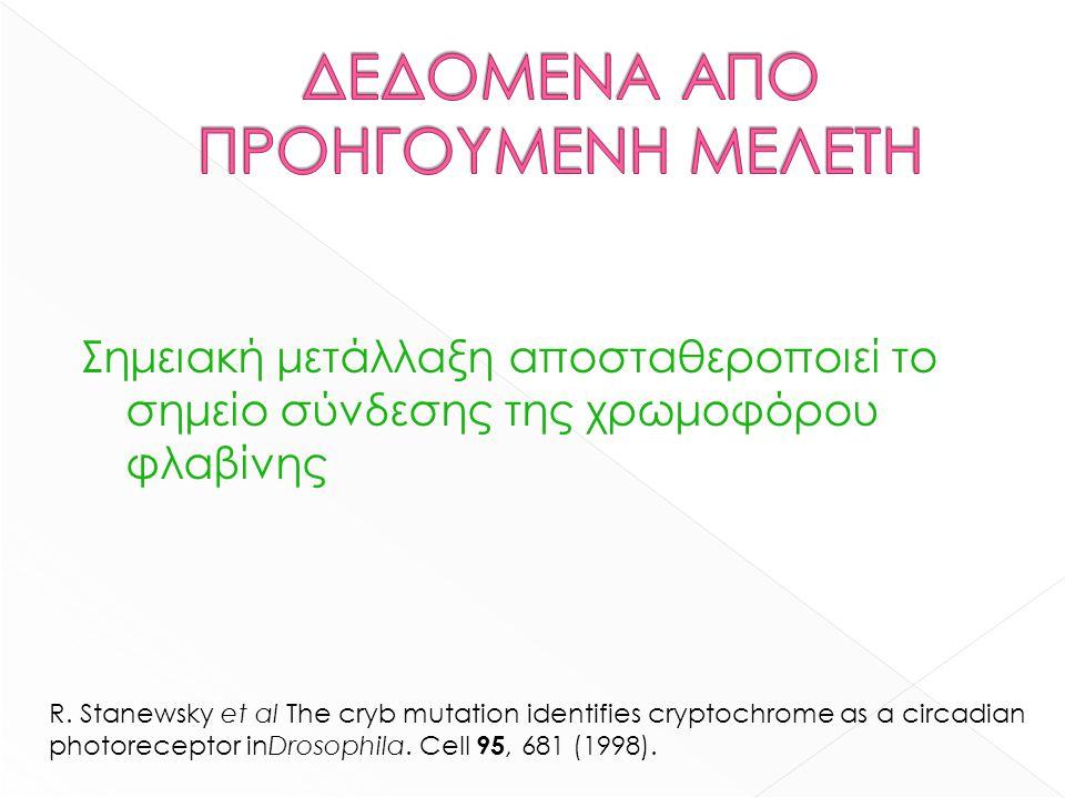 Σημειακή μετάλλαξη αποσταθεροποιεί το σημείο σύνδεσης της χρωμοφόρου φλαβίνης R. Stanewsky et al The cryb mutation identifies cryptochrome as a circad