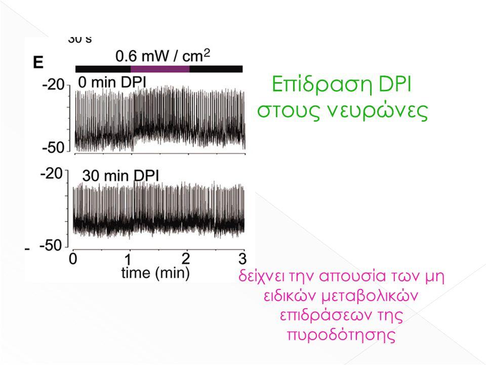 Επίδραση DPI στους νευρώνες δείχνει την απουσία των μη ειδικών μεταβολικών επιδράσεων της πυροδότησης