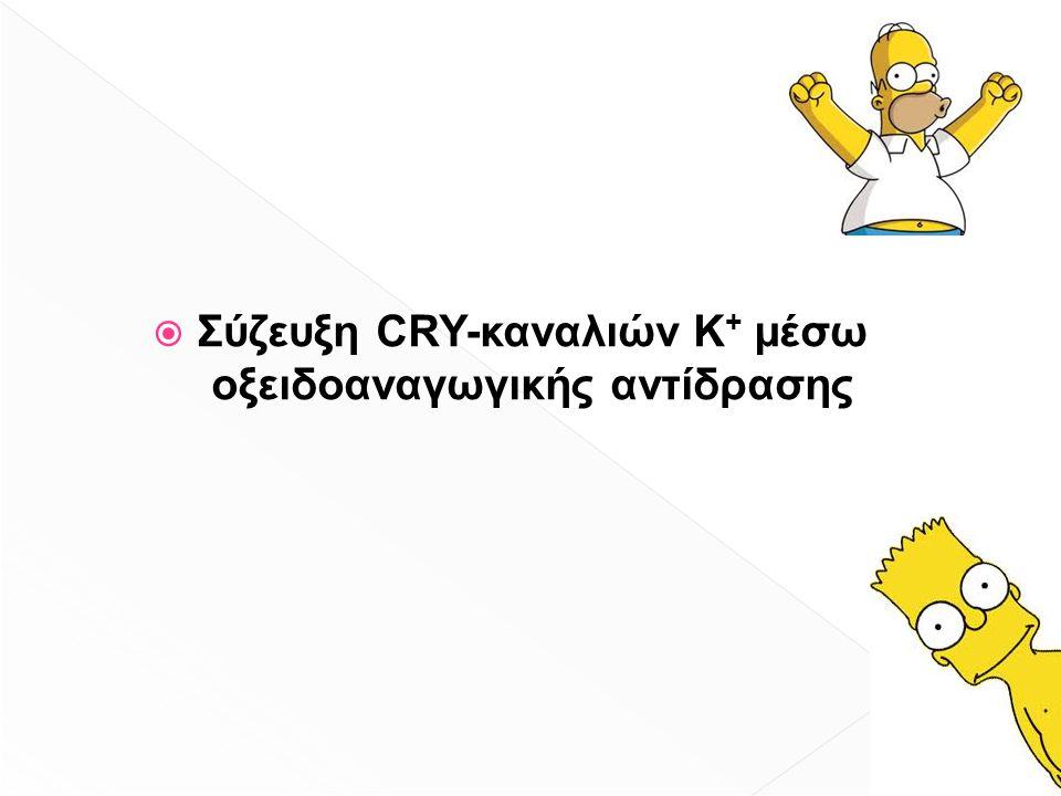  Σύζευξη CRY-καναλιών Κ + μέσω οξειδοαναγωγικής αντίδρασης