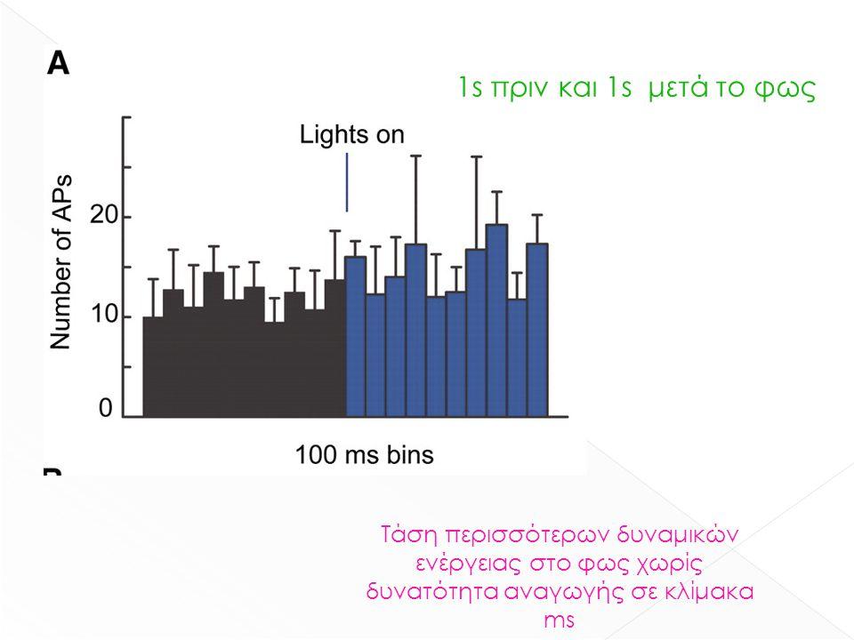 Τάση περισσότερων δυναμικών ενέργειας στο φως χωρίς δυνατότητα αναγωγής σε κλίμακα ms 1s πριν και 1s μετά το φως