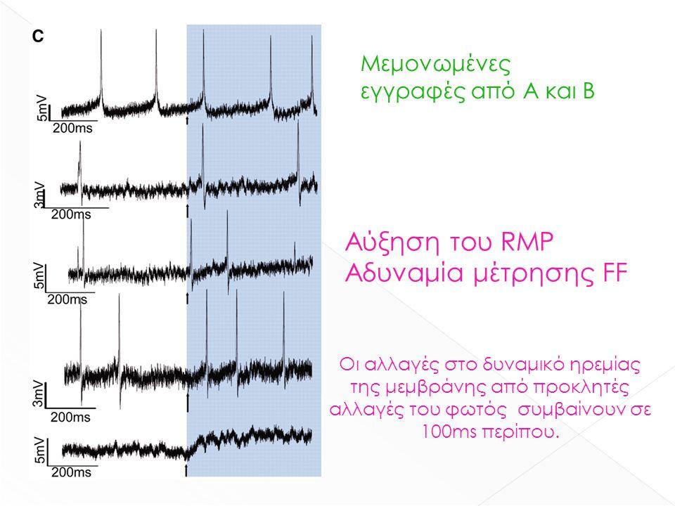 Μεμονωμένες εγγραφές από Α και Β Αύξηση του RMP Αδυναμία μέτρησης FF Οι αλλαγές στο δυναμικό ηρεμίας της μεμβράνης από προκλητές αλλαγές του φωτός συμ