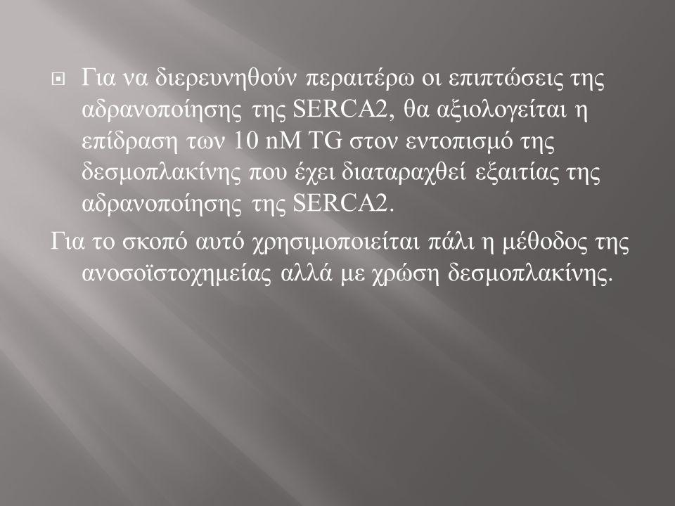  Για να διερευνηθούν περαιτέρω οι επιπτώσεις της αδρανοποίησης της SERCA2, θα αξιολογείται η επίδραση των 10 nΜ TG στον εντοπισμό της δεσμοπλακίνης που έχει διαταραχθεί εξαιτίας της αδρανοποίησης της SERCA2.