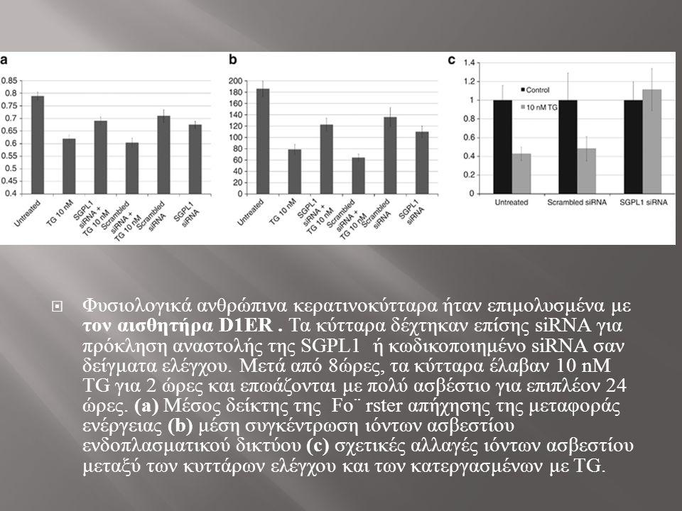  Φυσιολογικά ανθρώπινα κερατινοκύτταρα ήταν επιμολυσμένα με τον αισθητήρα D1ER.