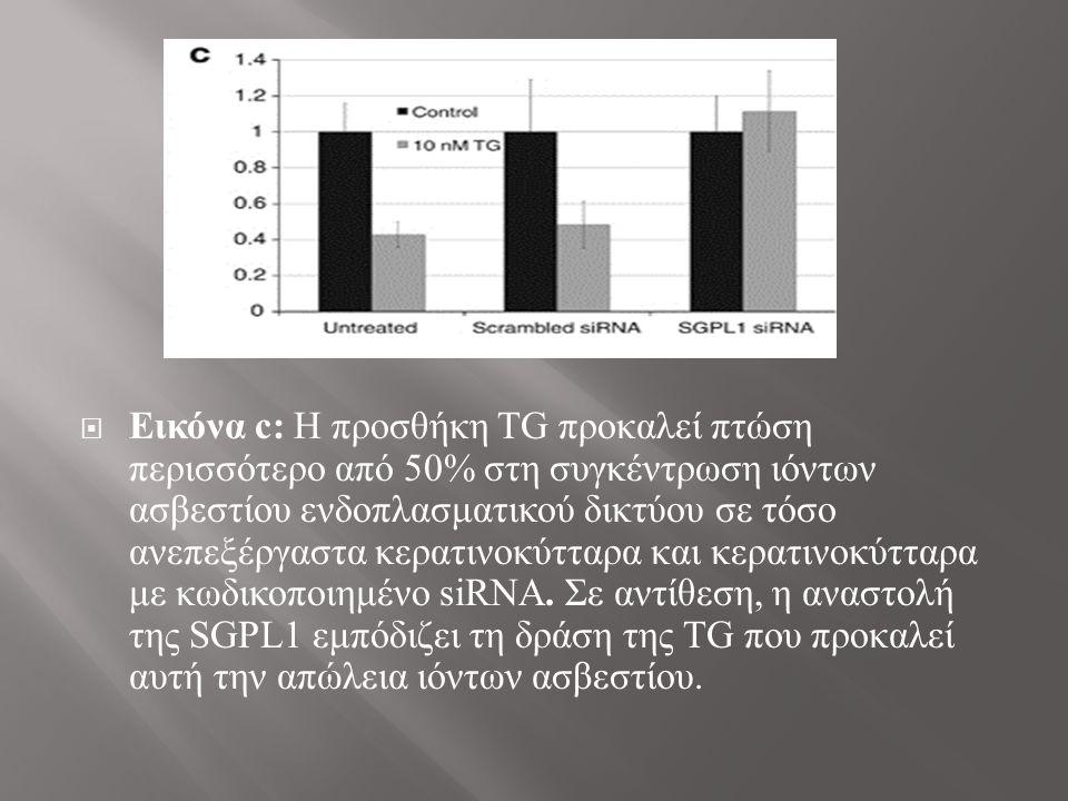  Εικόνα c: Η προσθήκη TG προκαλεί πτώση περισσότερο από 50% στη συγκέντρωση ιόντων ασβεστίου ενδοπλασματικού δικτύου σε τόσο ανεπεξέργαστα κερατινοκύτταρα και κερατινοκύτταρα με κωδικοποιημένο siRNA.