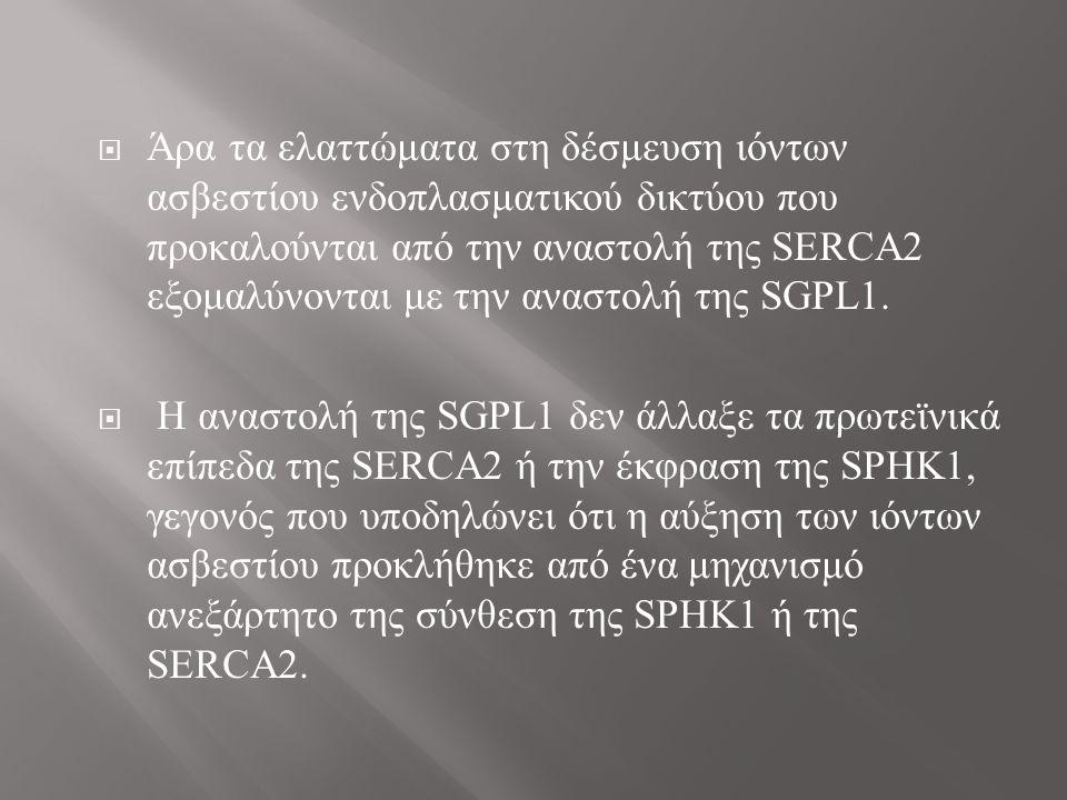  Άρα τα ελαττώματα στη δέσμευση ιόντων ασβεστίου ενδοπλασματικού δικτύου που προκαλούνται από την αναστολή της SERCA2 εξομαλύνονται με την αναστολή της SGPL1.