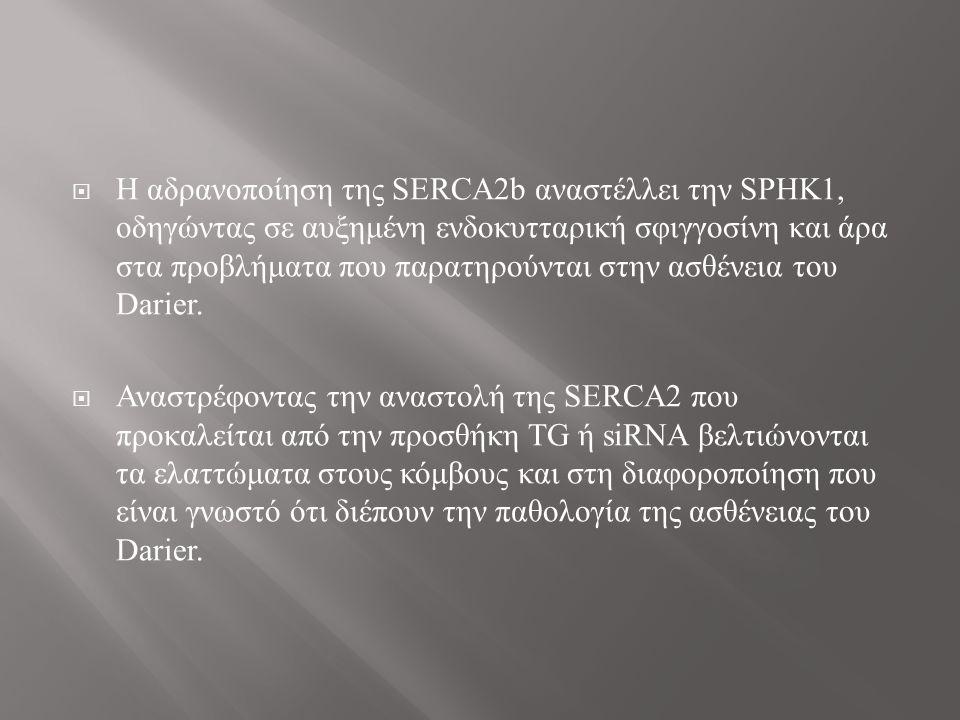  Η αδρανοποίηση της SERCA2b αναστέλλει την SPHK1, οδηγώντας σε αυξημένη ενδοκυτταρική σφιγγοσίνη και άρα στα προβλήματα που παρατηρούνται στην ασθένεια του Darier.