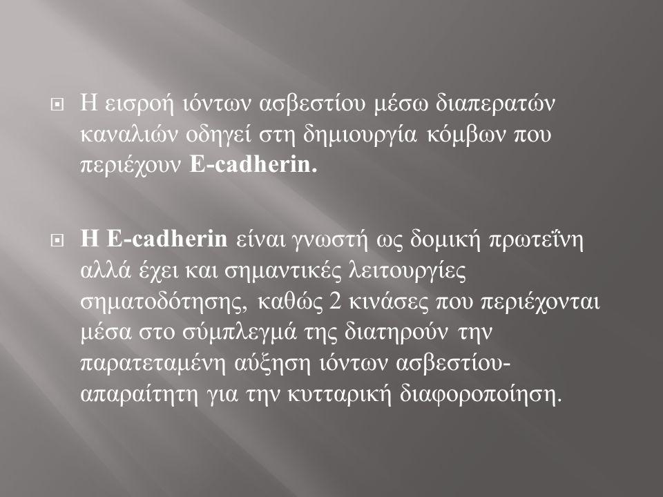  Τα πρωτεϊνικά επίπεδα των E- cadherin και involucrin αξιολογήθηκαν χρησιμοποιώντας τη μέθοδο ανοσοαποτύπωση κατά Western.