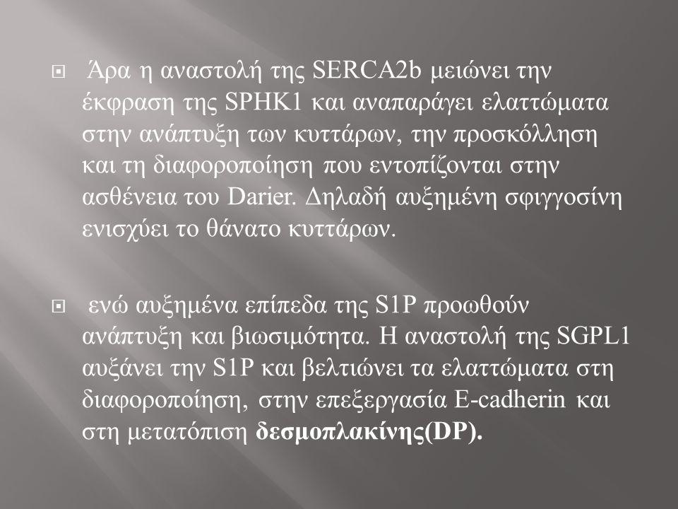 (d) Η αναστολή της SGPL1 με το siRNA αποκαθιστά συνεχή και λεπτή την εξωκυττάρια εντόπιση της E-cadherin (c and g) Κωδικοποιημένα siRNA δεν μπορούν να φανερώσουν την εξωκυττάρια ή ενδοκυττάρια εντόπιση της E-cadherin.
