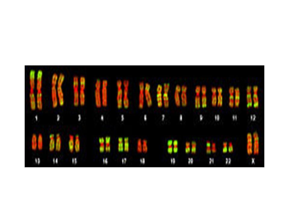 Ανευπλοειδία: Μονοσωμία:Σύνδρομο Turner(45,X0) Τρισωμία: Αυτοσωμικών χρωμοσωμάτων(21,18,13) Φυλετικών χρωμοσωμάτων:Κlinefelter (47,XXY) Μωσαικισμός:Ανωμαλίες που προκύπτουν από την πρώτη μίτωση Περισσότερες από μια κυτταρικές σειρές σε ένα άτομο