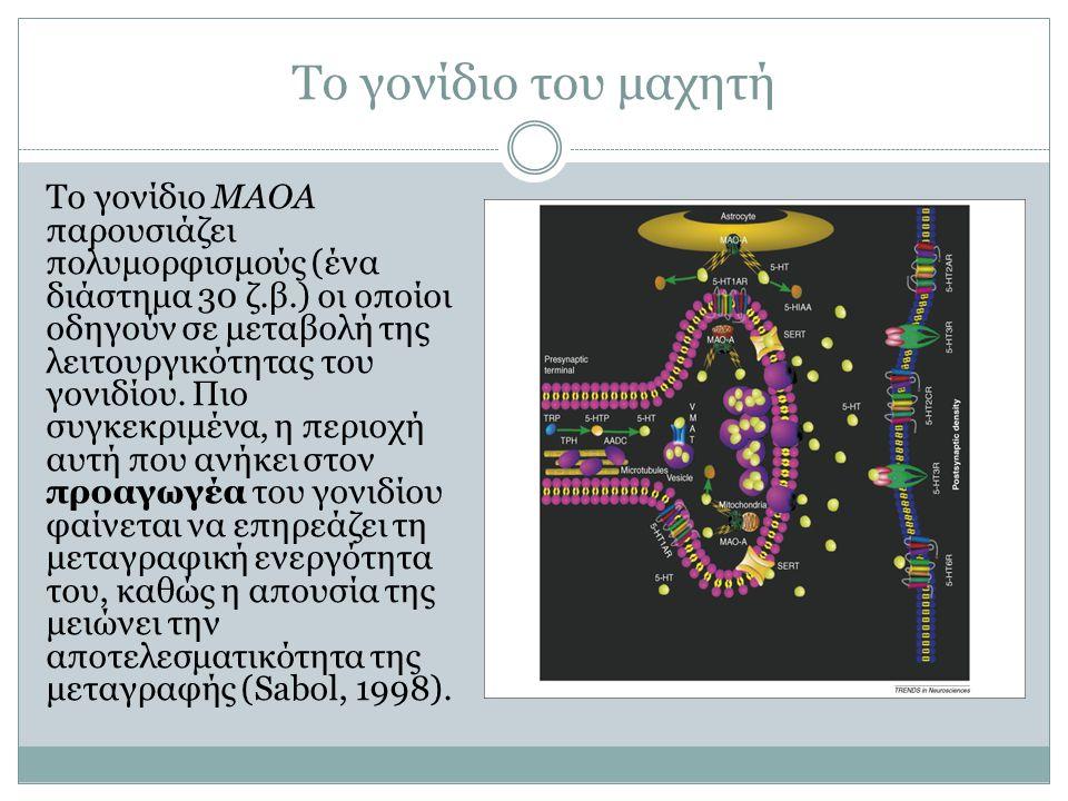 Το γονίδιο του μαχητή Το γονίδιο ΜΑΟΑ παρουσιάζει πολυμορφισμούς (ένα διάστημα 30 ζ.β.) οι οποίοι οδηγούν σε μεταβολή της λειτουργικότητας του γονιδίο