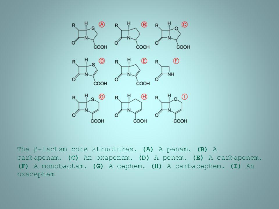 The β-lactam core structures.(A) A penam. (B) A carbapenam.