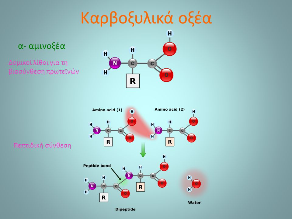 Καρβοξυλικά οξέα α- αμινοξέα Δομικοί λίθοι για τη βιοσύνθεση πρωτεϊνών Πεπτιδική σύνθεση