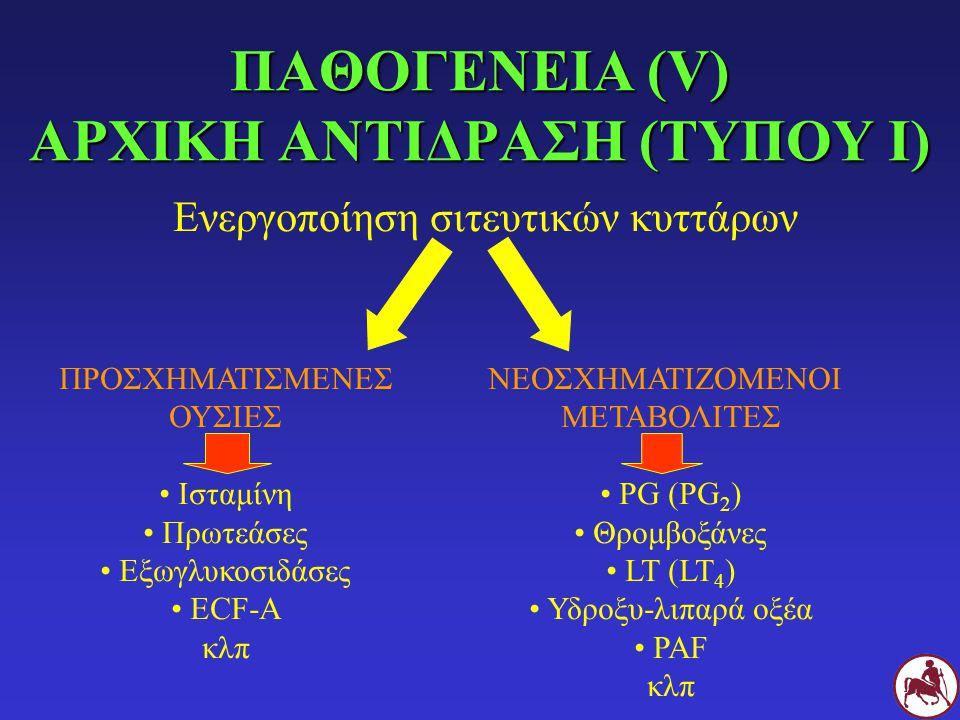 ΠΑΘΟΓΕΝΕΙΑ (V) ΑΡΧΙΚΗ ΑΝΤΙΔΡΑΣΗ (ΤΥΠΟΥ Ι) Ενεργοποίηση σιτευτικών κυττάρων ΠΡΟΣΧΗΜΑΤΙΣΜΕΝΕΣ ΟΥΣΙΕΣ Ισταμίνη Πρωτεάσες Εξωγλυκοσιδάσες ECF-A κλπ ΝΕΟΣΧΗ