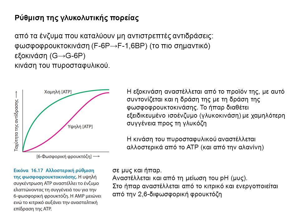 Ρύθμιση της γλυκολυτικής πορείας από τα ένζυμα που καταλύουν μη αντιστρεπτές αντιδράσεις: φωσφοφρουκτοκινάση (F-6P → F-1,6BP) (το πιο σημαντικό) εξοκι