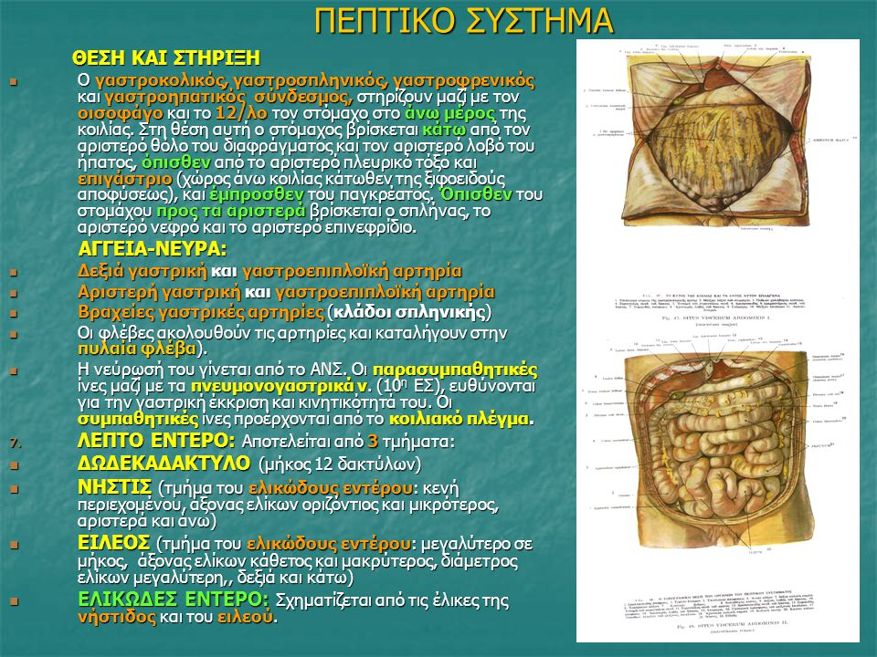 ΠΕΠΤΙΚΟ ΣΥΣΤΗΜΑ ΘΕΣΗ ΚΑΙ ΣΤΗΡΙΞΗ ΘΕΣΗ ΚΑΙ ΣΤΗΡΙΞΗ Ο γαστροκολικός, γαστροσπληνικός, γαστροφρενικός και γαστροηπατικός σύνδεσμος, στηρίζουν μαζί με τον
