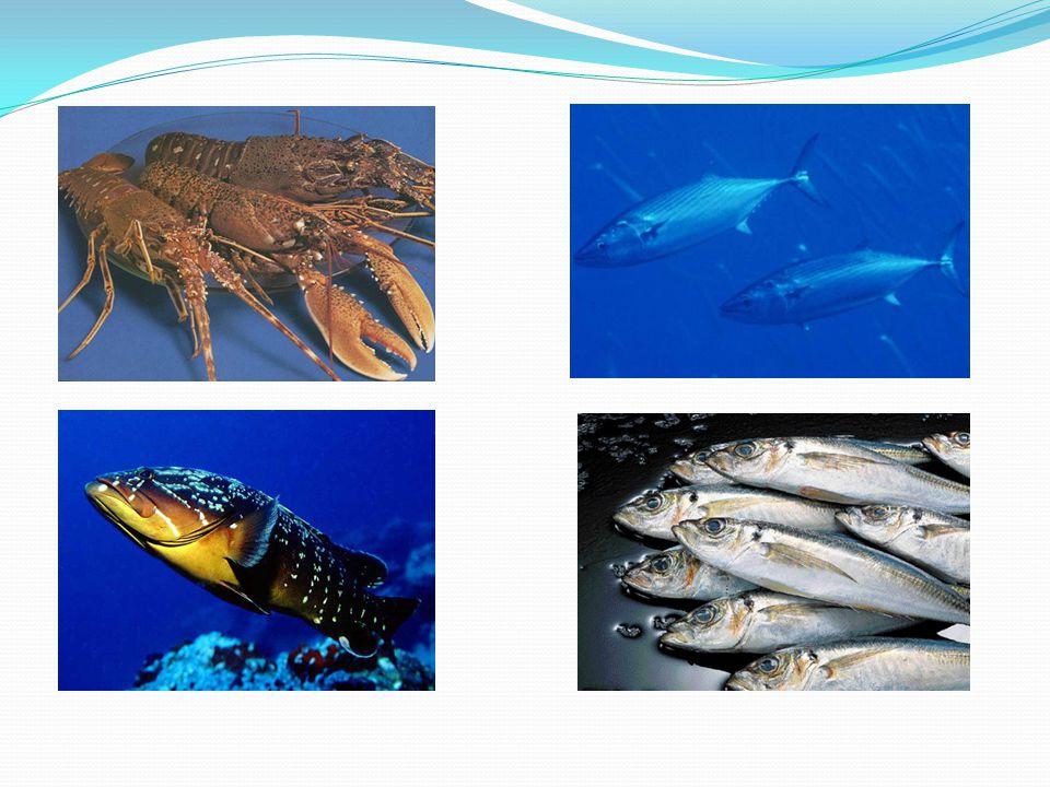 Επίσης εκτός από την επαγγελματική αλιεία υπάρχει και η ερασιτεχνική αλιεία.