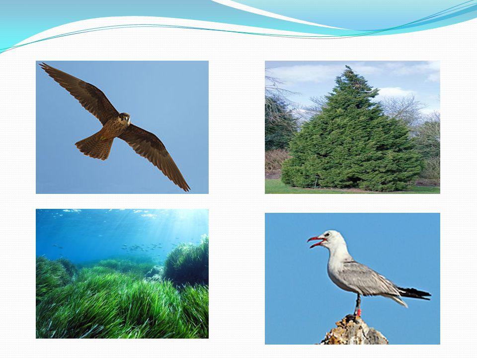 Καταρχάς το θαλάσσιο πάρκο Αλοννήσου είναι το πρώτο στην Ελλάδα και το μεγαλύτερο στην Ευρώπη και την μεσόγειο, το οποίο φιλόξενη μερικούς οργανισμούς οι όποιοι βρίσκονται υπό εξαφάνιση.