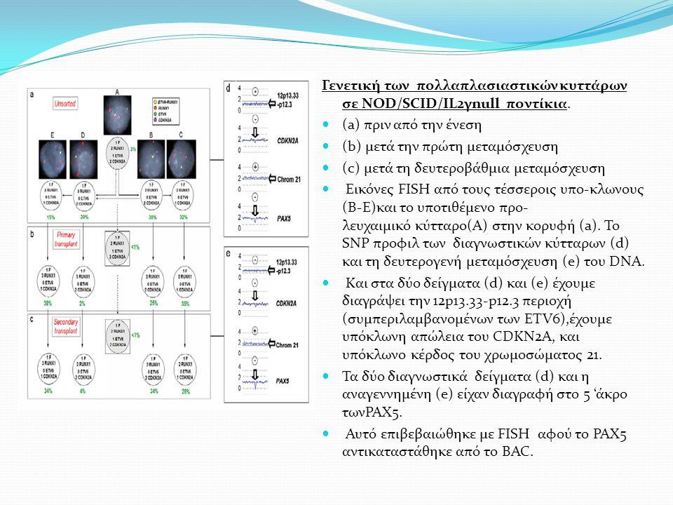 Γενετική των πολλαπλασιαστικών κυττάρων σε NOD/SCID/IL2γnull ποντίκια. (a) πριν από την ένεση (b) μετά την πρώτη μεταμόσχευση (c) μετά τη δευτεροβάθμι