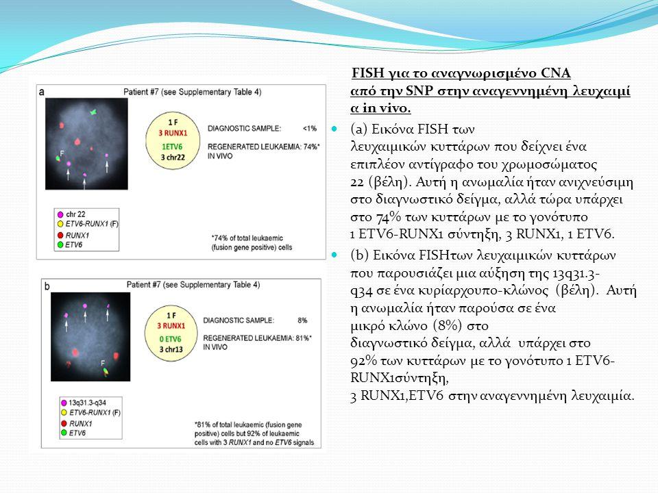 FISH για το αναγνωρισμένο CNA από την SNP στην αναγεννημένη λευχαιμί α in vivo. (a) Εικόνα FISH των λευχαιμικών κυττάρων που δείχνει ένα επιπλέον αντί