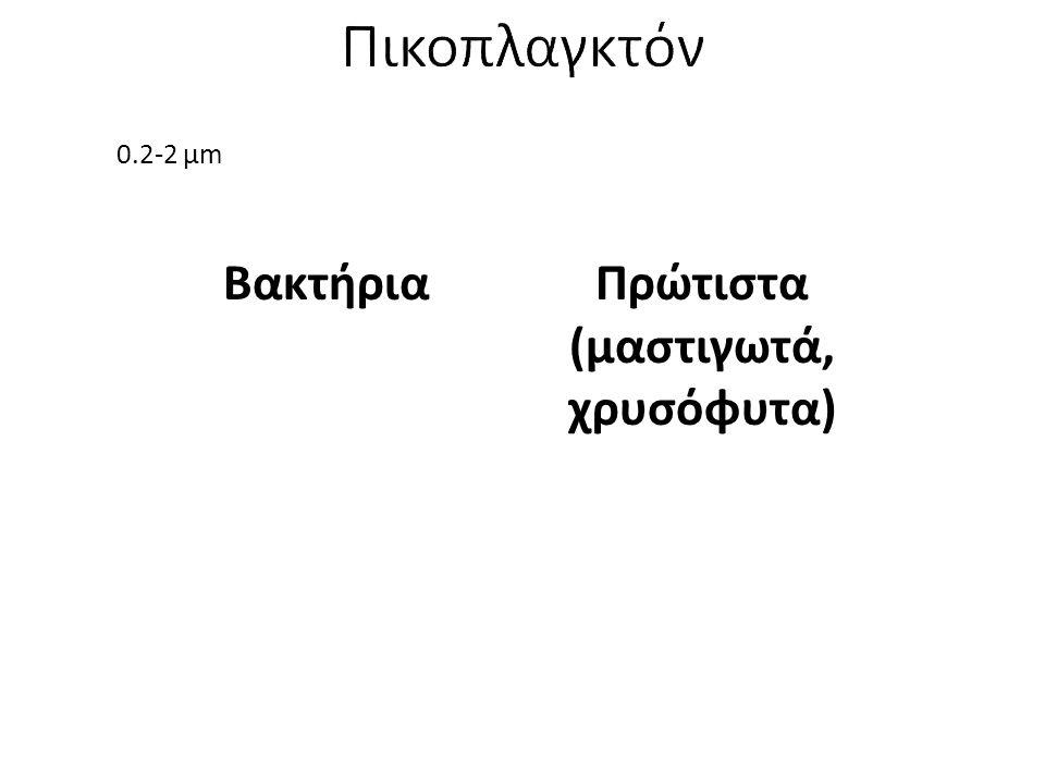 0.2-2 μm ΒακτήριαΠρώτιστα (μαστιγωτά, χρυσόφυτα)