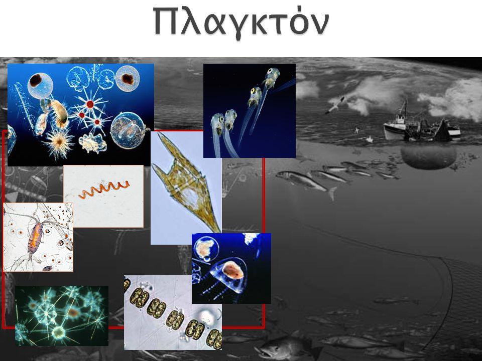 0.2-2 μm Βακτήρια & Αρχαία