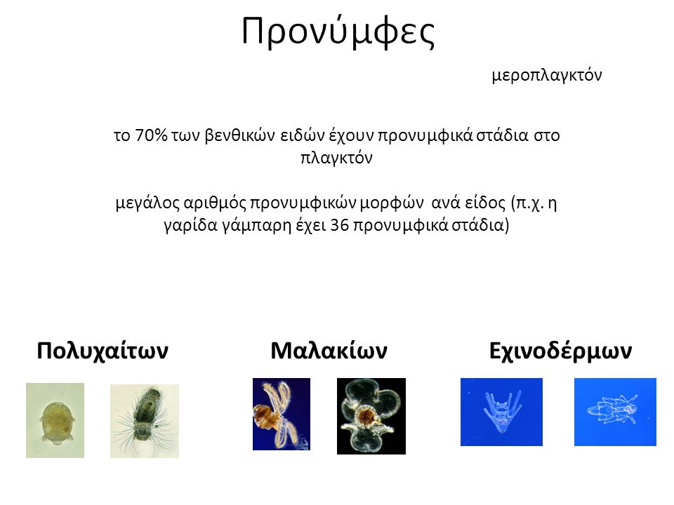 ΠολυχαίτωνΜαλακίων το 70% των βενθικών ειδών έχουν προνυμφικά στάδια στο πλαγκτόν μεγάλος αριθμός προνυμφικών μορφών ανά είδος (π.χ. η γαρίδα γάμπαρη