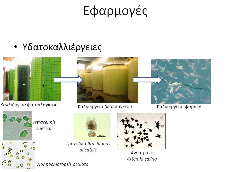 Υδατοκαλλιέργειες Τροχόζωο Brachionus plicatilis Καλλιέργεια φυτοπλαγκτού Καλλιέργεια ζωοπλαγκτούΚαλλιέργεια ψαριών Ανόστρακο Artemia salina Tetraselm
