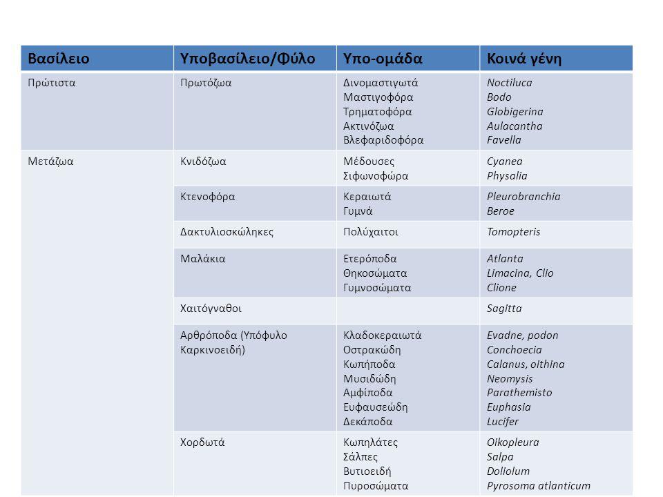ΒασίλειοΥποβασίλειο/ΦύλοΥπο-ομάδαΚοινά γένη ΠρώτισταΠρωτόζωαΔινομαστιγωτά Μαστιγοφόρα Τρηματοφόρα Ακτινόζωα Βλεφαριδοφόρα Noctiluca Bodo Globigerina A