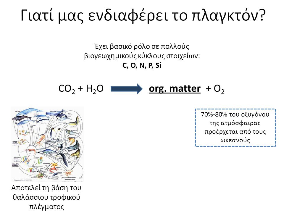 CO 2 + H 2 O org. matter + O 2 70%-80% του οξυγόνου της ατμόσφαιρας προέρχεται από τους ωκεανούς Αποτελεί τη βάση του θαλάσσιου τροφικού πλέγματος Έχε