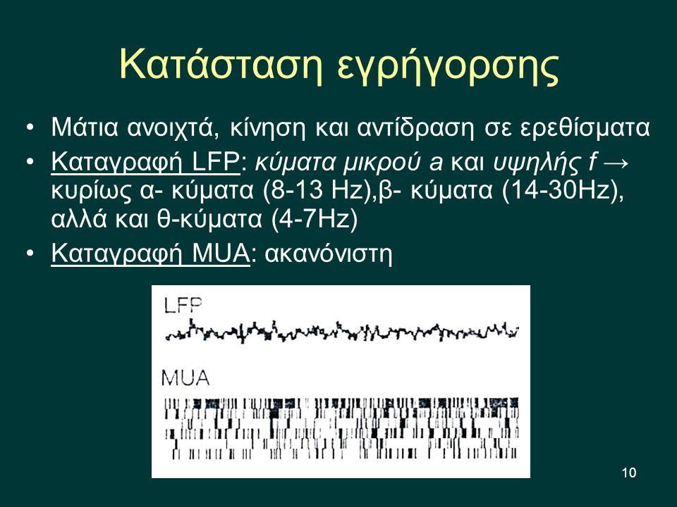 10 Κατάσταση εγρήγορσης Μάτια ανοιχτά, κίνηση και αντίδραση σε ερεθίσματα Καταγραφή LFP: κύματα μικρού a και υψηλής f → κυρίως α- κύματα (8-13 Hz),β- κύματα (14-30Hz), αλλά και θ-κύματα (4-7Hz) Καταγραφή MUA: ακανόνιστη