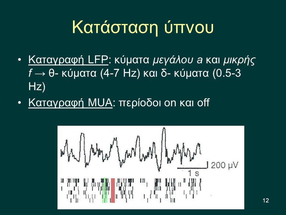 12 Κατάσταση ύπνου Καταγραφή LFP: κύματα μεγάλου a και μικρής f → θ- κύματα (4-7 Hz) και δ- κύματα (0.5-3 Hz) Καταγραφή MUA: περίοδοι on και off