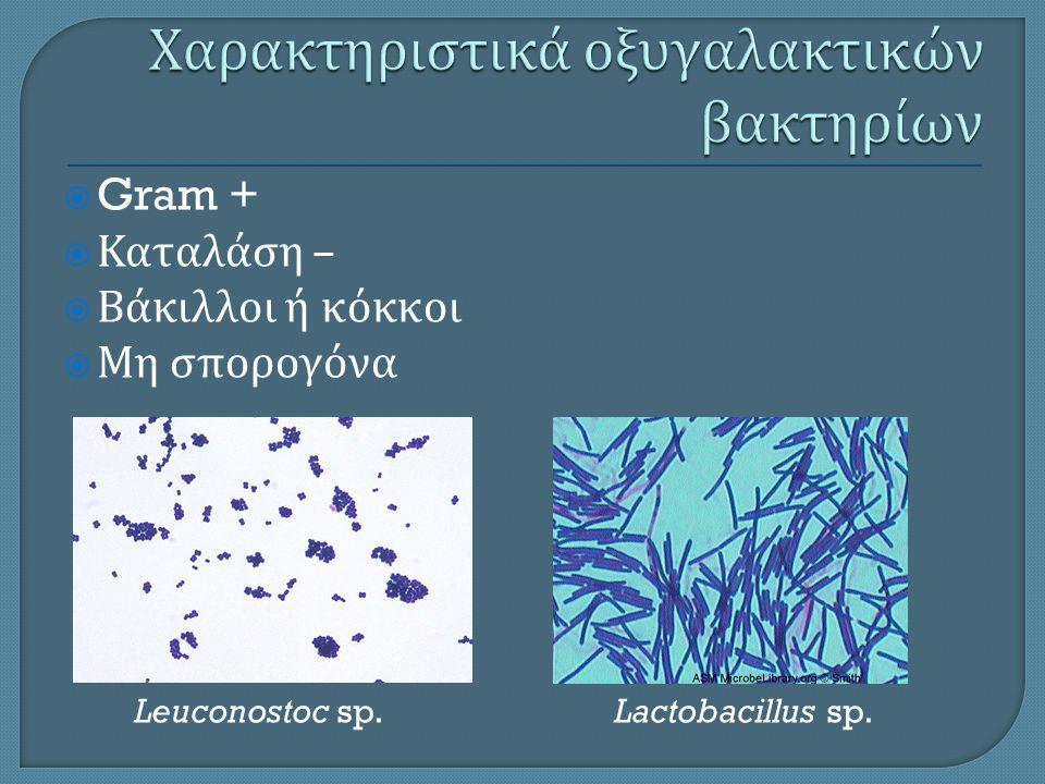  Gram +  Καταλάση –  Βάκιλλοι ή κόκκοι  Μη σπορογόνα Leuconostoc sp.Lactobacillus sp.