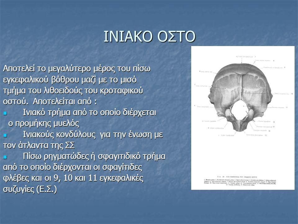 ΙΝΙΑΚΟ ΟΣΤΟ Αποτελεί το μεγαλύτερο μέρος του πίσω εγκεφαλικού βόθρου μαζί με το μισό τμήμα του λιθοειδούς του κροταφικού οστού.