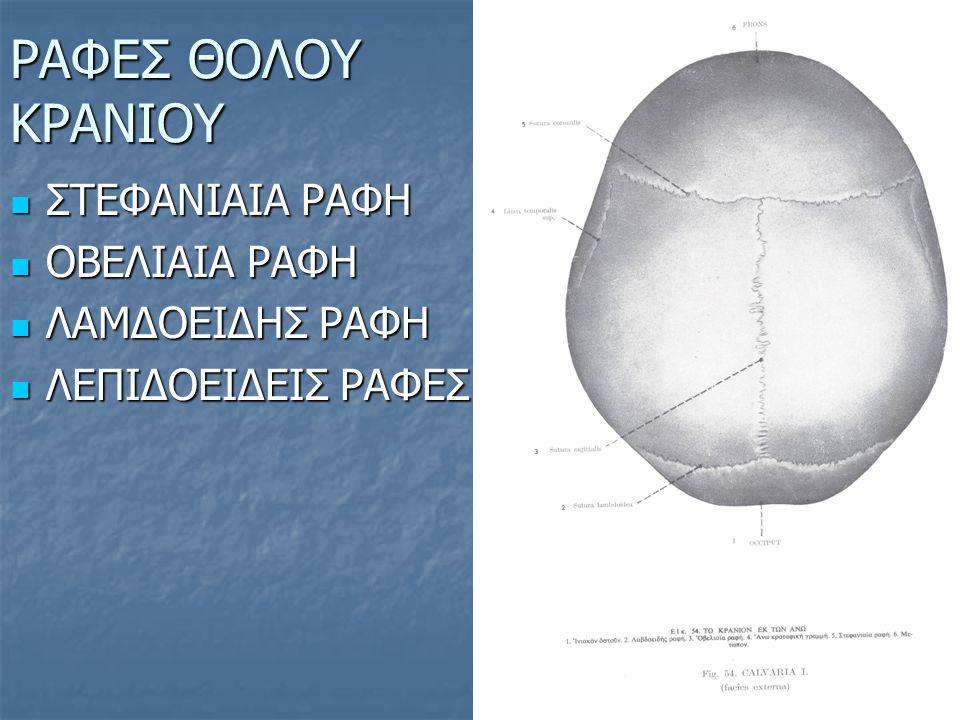 ΟΣΤΑ ΕΓΚΕΦΑΛΙΚΟΥ ΚΡΑΝΙΟΥ Είναι 8 και διακρίνονται σε μονά και ζυγά ΜΟΝΑ ΜΟΝΑ ΖΥΓΑ ΖΥΓΑ 1.