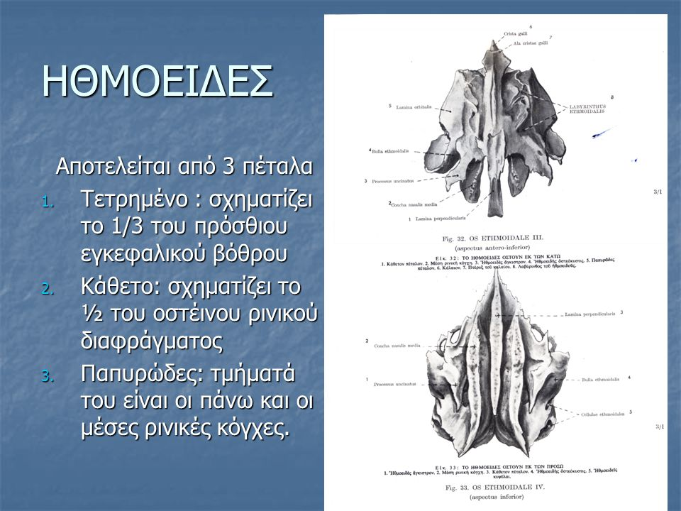 BAΣΗ ΤΟΥ ΚΡΑΝΙΟΥ Αποτελείται από τους 3 κρανιακούς βόθρους Αποτελείται από τους 3 κρανιακούς βόθρους 1.