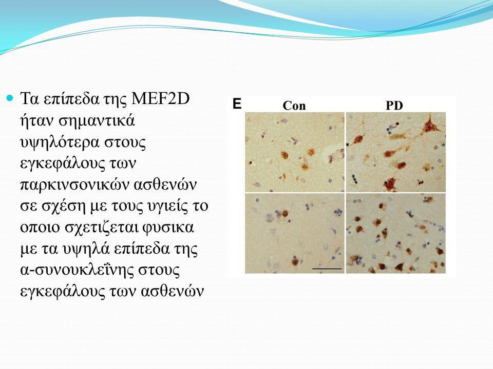 Τα επίπεδα της MEF2D ήταν σημαντικά υψηλότερα στους εγκεφάλους των παρκινσονικών ασθενών σε σχέση με τους υγιείς το οποιο σχετιζεται φυσικα με τα υψηλά επίπεδα της α-συνουκλεΐνης στους εγκεφάλους των ασθενών