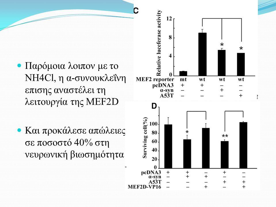 Παρόμοια λοιπον με το NH4Cl, η α-συνουκλεΐνη επισης αναστέλει τη λειτουργία της MEF2D Και προκάλεσε απώλειες σε ποσοστό 40% στη νευρωνική βιωσημότητα