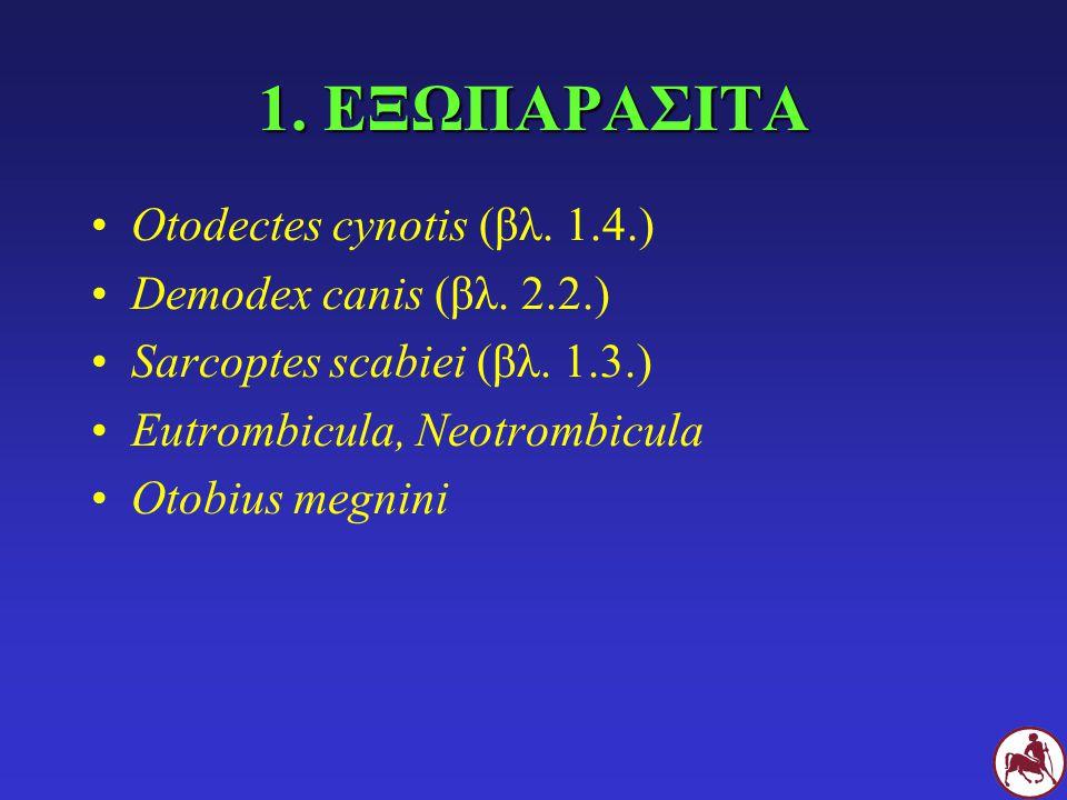 1. ΕΞΩΠΑΡΑΣΙΤΑ Otodectes cynotis (βλ. 1.4.) Demodex canis (βλ. 2.2.) Sarcoptes scabiei (βλ. 1.3.) Eutrombicula, Neotrombicula Otobius megnini