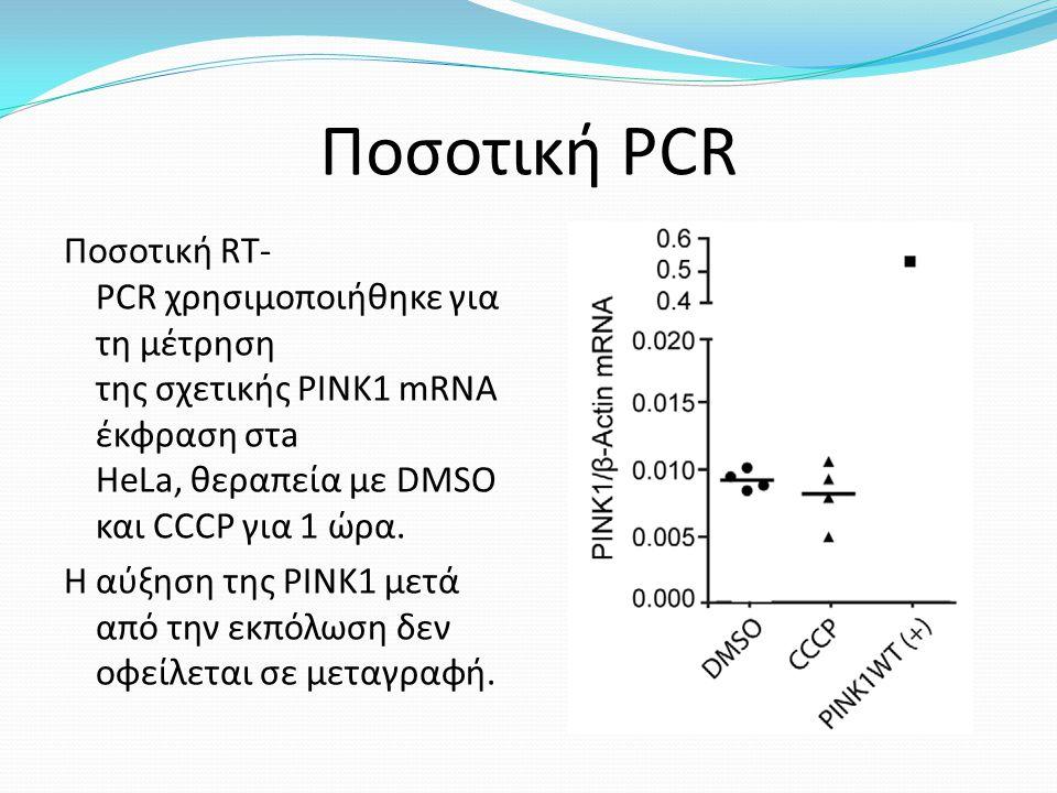Ποσοτική PCR Ποσοτική RT- PCR χρησιμοποιήθηκε για τη μέτρηση της σχετικής PINK1 mRNA έκφραση στa HeLa, θεραπεία με DMSO και CCCP για 1 ώρα.