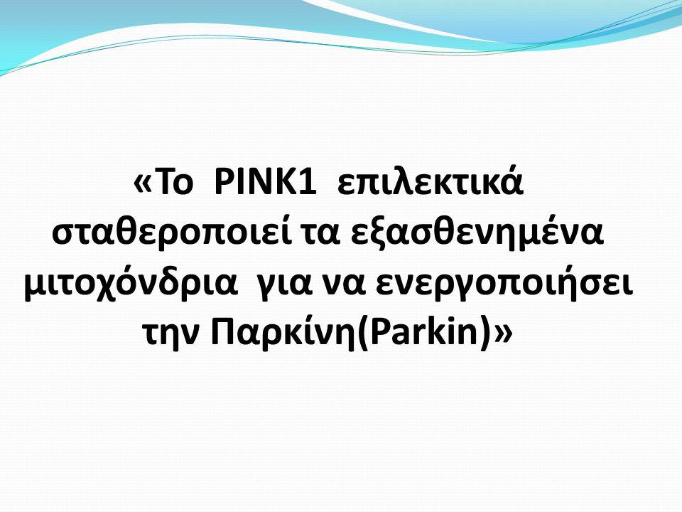 «Το ΡΙΝΚ1 επιλεκτικά σταθεροποιεί τα εξασθενημένα μιτοχόνδρια για να ενεργοποιήσει την Παρκίνη(Parkin)»