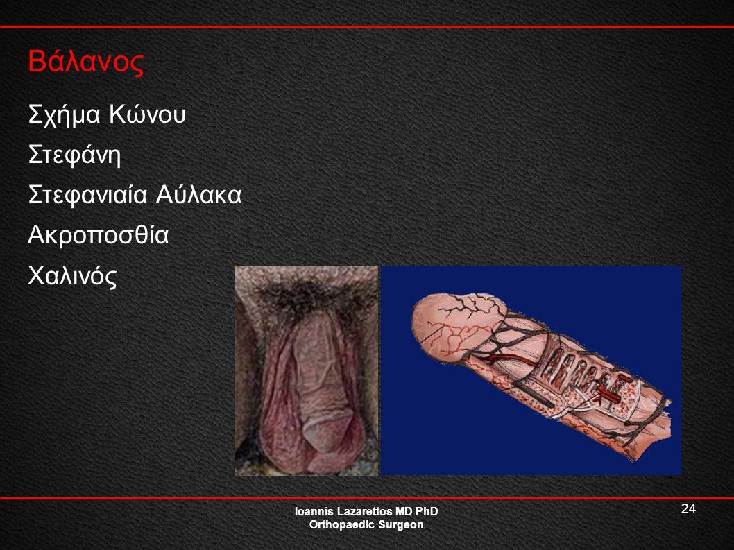24 Βάλανος Ioannis Lazarettos MD PhD Orthopaedic Surgeon Σχήμα Κώνου Στεφάνη Στεφανιαία Αύλακα Ακροποσθία Χαλινός