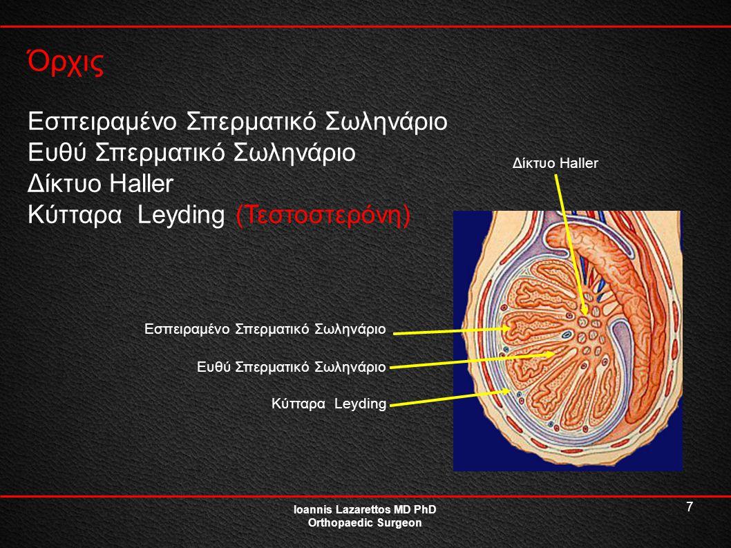 7 Όρχις Ioannis Lazarettos MD PhD Orthopaedic Surgeon Εσπειραμένο Σπερματικό Σωληνάριο Ευθύ Σπερματικό Σωληνάριο Δίκτυο Haller Κύτταρα Leyding (Τεστοσ