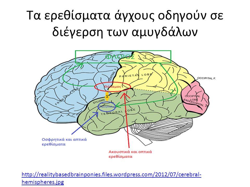 Τα ερεθίσματα άγχους οδηγούν σε διέγερση των αμυγδάλων http://realitybasedbrainponies.files.wordpress.com/2012/07/cerebral- hemispheres.jpg