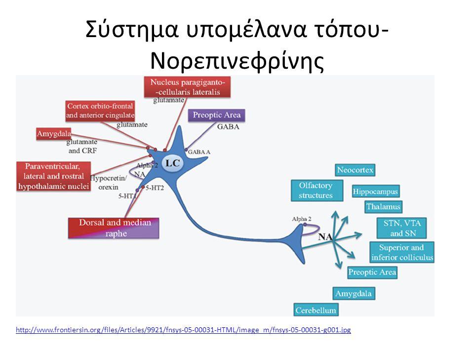Σύστημα υπομέλανα τόπου- Νορεπινεφρίνης http://www.frontiersin.org/files/Articles/9921/fnsys-05-00031-HTML/image_m/fnsys-05-00031-g001.jpg