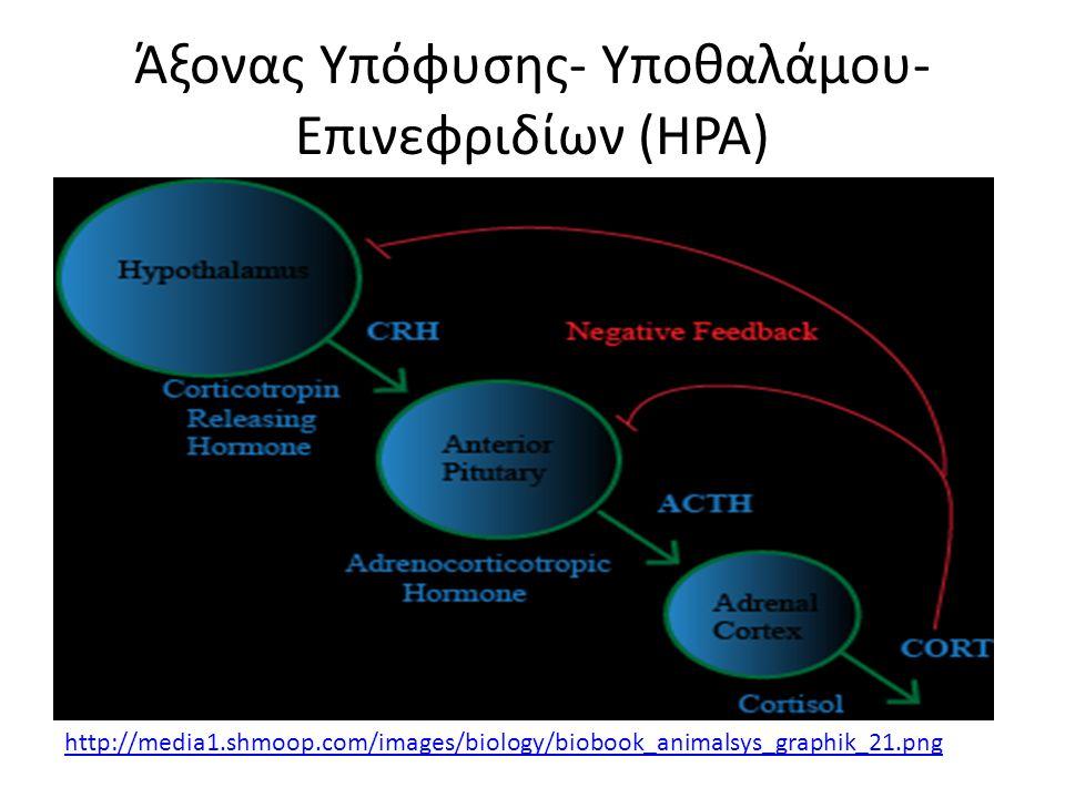 Άξονας Υπόφυσης- Υποθαλάμου- Επινεφριδίων (HPA) http://media1.shmoop.com/images/biology/biobook_animalsys_graphik_21.png
